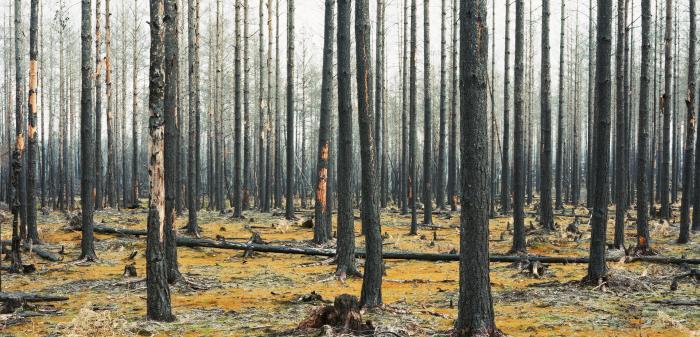 Uppmärksammad fotograf som skildrar mötet mellan människa och naturkrafter. I poetiska men också skrämmande kompositioner visar hon naturen som både vacker och skoningslös.